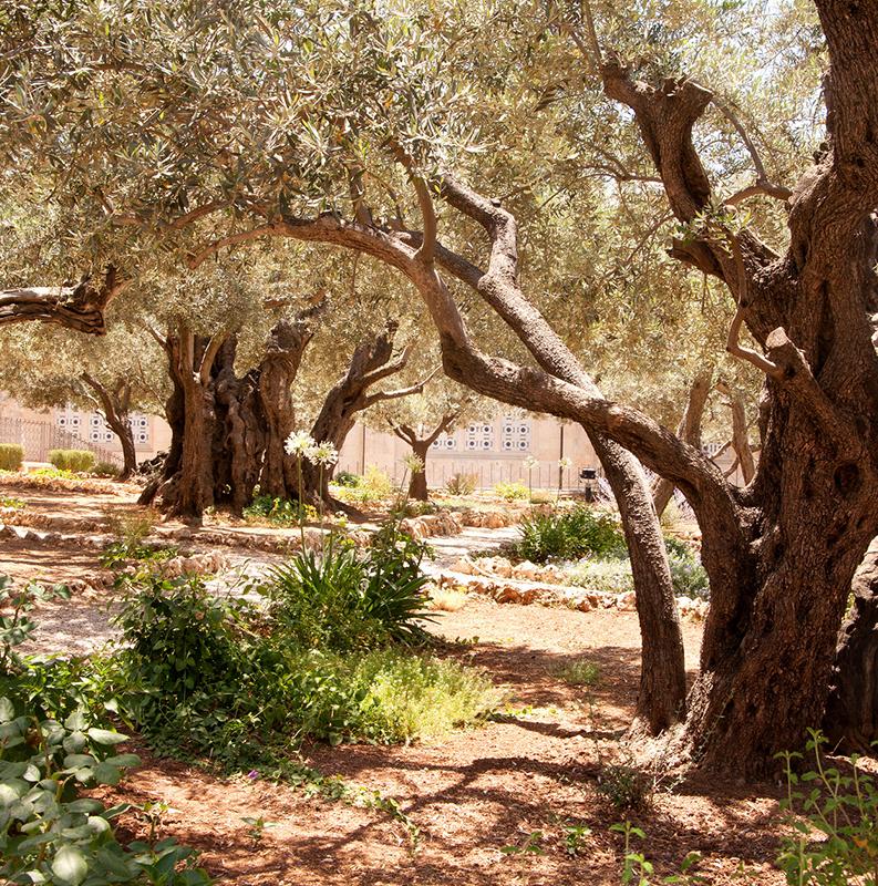 TEL AVIV/ JERUSALÉM/ GETSEMANI/ CASA DE CAIFÁS/ TANQUE DE BETESDA/ VIA DOLOROSA/ FORTALEZA ANTÔNIA/ JARDIM DA TUMBA